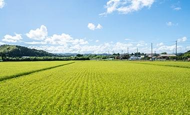 千葉県いすみ市の田園風景の写真
